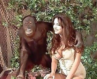 Videos Zoo