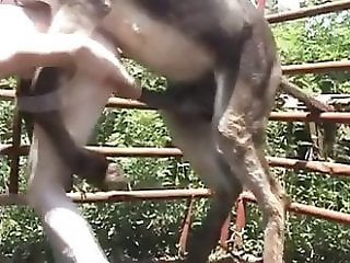 Webcam Zoo porn