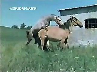 Horses Porno