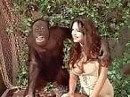 monkeyanimalporn