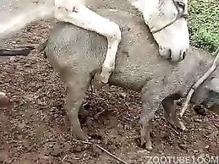 taboo zoo x