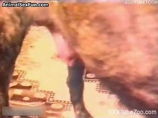 Doggy licks and fucks a pussy of a passionate zoo slut