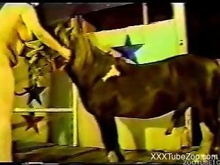 Beautiful hottie is sucking pony's dick in ZOO porn from 80s