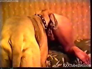 Massive Great Dane makes love with big-boobied mistress