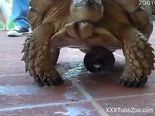 Blond-haired MILF zoophile wants to fuck a turtle