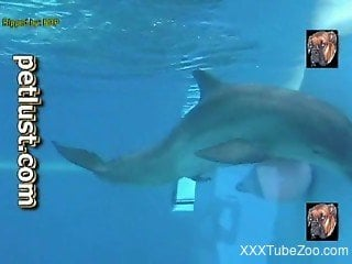 Horny dolphin underwater zoo fetish caught on cam