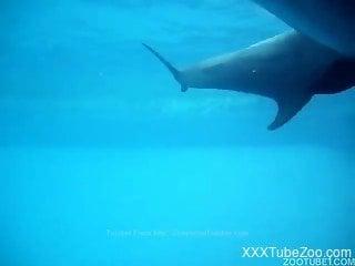 Underwater sex featuring sea creatures that fuck