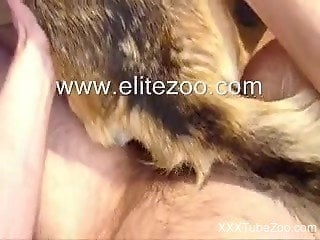 Dude fucking his dog's tight pussy in a hot POV video