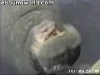 Hot video of a hippo for all zoophile enthusiasts