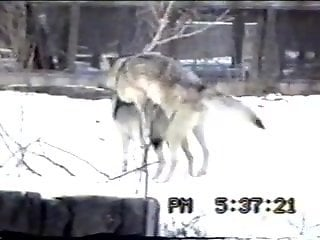Sexy wolves enjoying hardcore fucking outdoors