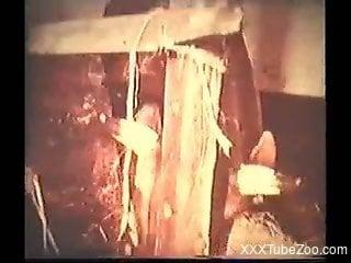 Retro bestiality video with hardcore doggy style fucking