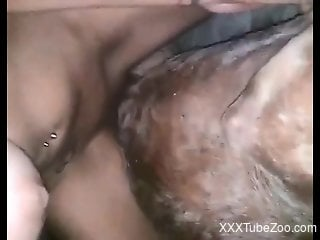 Brunette spreads her legs to let the animal lick her pussy